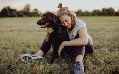 Labrador Retrieverhündin Frieda