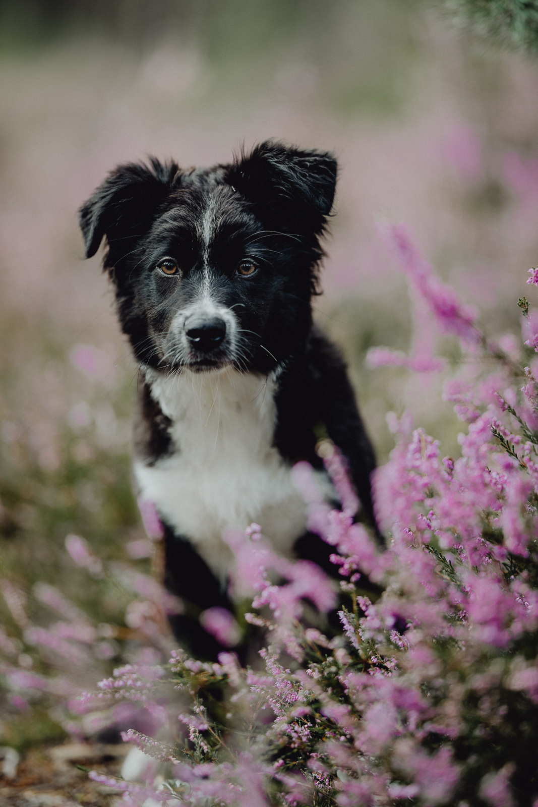 Hundefotograf Bayern